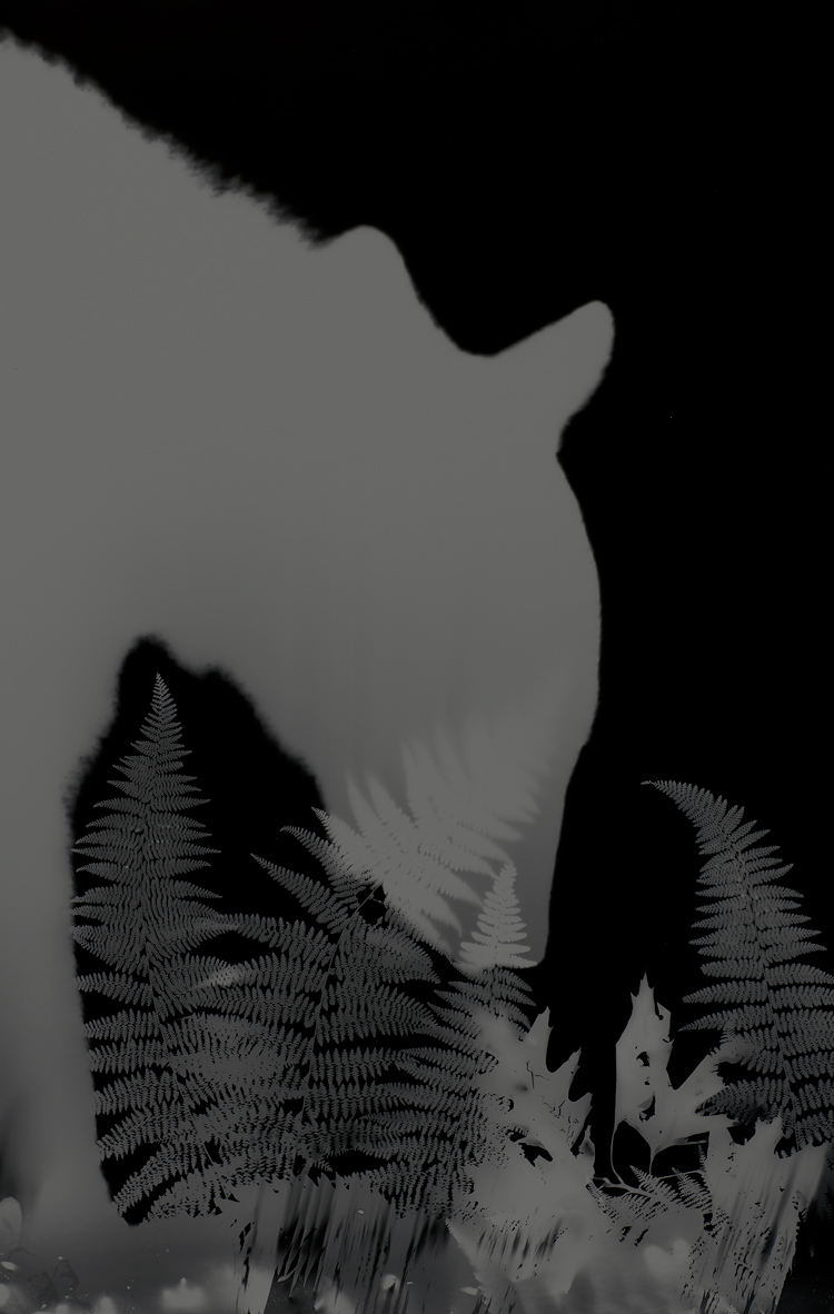 Zana Briski bear